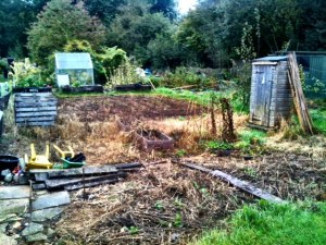 Allotment photo day 1 Oct 2012